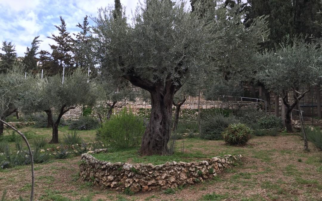 Jerusalem, Mount of Olives, Upper Room & Western Wall